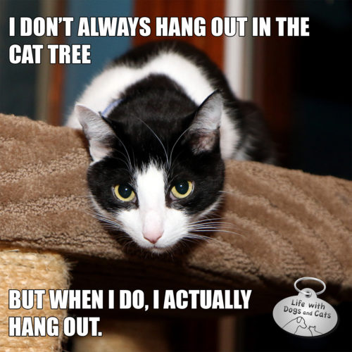 I don't always hang out in the cat tree, but when I do I actually hang out.