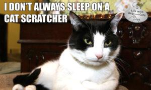 I Don't Always Sleep on Cat Scratcher #MostInterestingCatInTheWorld