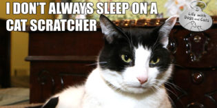 I Don't Always Sleep on Cat Scratcher #MostInterestingCatInTheWorld
