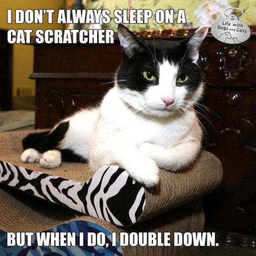I don't always sleep on a cat scratcher. But when I do, I double down. #MostINterestingCatInTheWorld #StayComfy, my friends