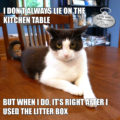 I don't always lie on the kitchen table. But when I do, it's right after I used the littler box. #MostInterestingCatInTheWorld #StayComfy, my friends