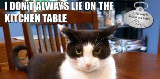 I Don't Always Lie on the Kitchen Table #MostInterestingCatInTheWorld