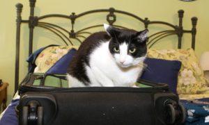I Don't Always Sit on Your Suitcase #MostInterestingCatInTheWorld