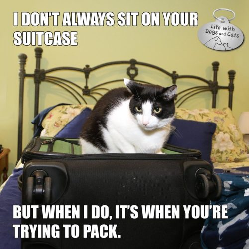 I don't always sit on your suitcase. But when I do, it's when you're trying to pack. #MostInterestingCatInTheWorld #StayComfy, my friends