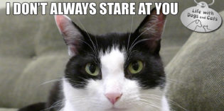 I Don't Always Stare at You #MostInterestingCatInTheWorld