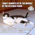 I don't always lie in the middle of the kitchen floor. But when I do, you're probably trying to cook dinner. #MostInterestingCatInTheWorld #StayComfy, my friends