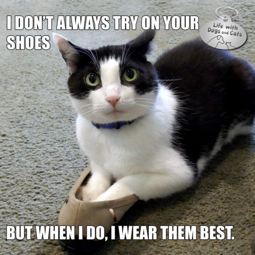 I don't always try on your shoes. But when I do, I wear them best. #MostInterestingCatInTheWorld