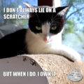 I don't always lie on a scratcher. But when I do, I own it. #MostInterestingCatInTheWorld #StayComfy, my friends.