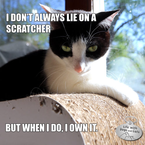 I don't always lie on a scratcher. But when I do, I own it. #MostInterestingCatInTheWorld #StayComfy, my friends.