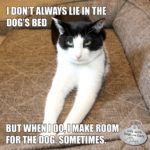 I Don't Always Lie in the Dog's Bed #MostInterestingCatInTheWorld