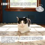 I Don't Always Lie in the Sun #MostInterestingCatInTheWorld