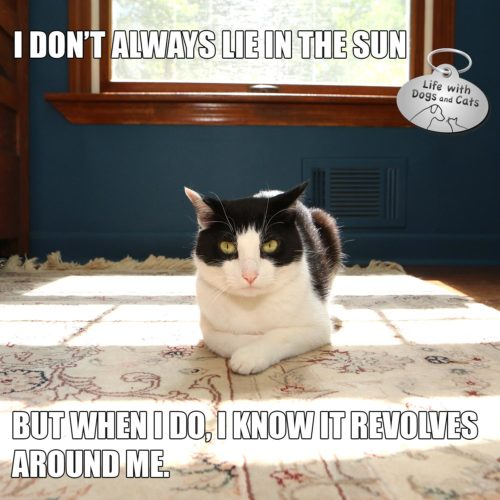 I don't always lie in the sun but when I do, I know it revolves around me #MostInterestingCatInTheWorld #StayComfy, my friends
