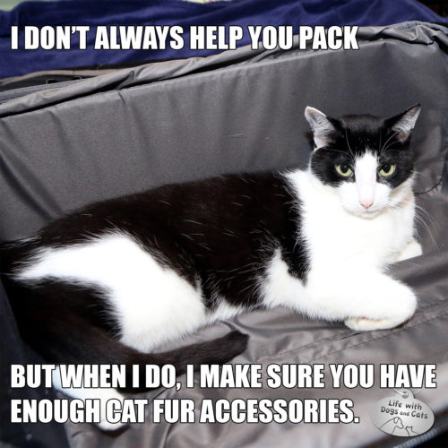 I don't always help you pack. But when I do, I make sure you have enough fur accessories. #MostInterestingCatInTheWorld #Staycomfy, My Friends
