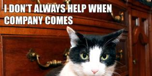 I Don't Always Help When Company Comes #MostInterestingCatInTheWorld