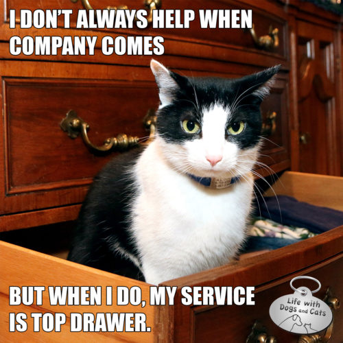 I don't always help when company comes. But when I do, my service it top drawer. #MostInterestingCatInTheWorld #StayComfy, my friends