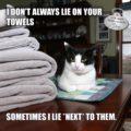 I don't always lie on your towels. Sometimes I lie *next* to them. #MostInterestingCatInTheWorld #StayComfy, my friends.