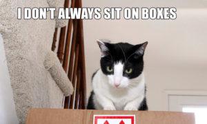I Don't Always Sit on Boxes #MostInterestingCatInTheWorld