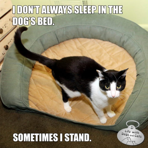 I don't always sleep in the dog's bed. Sometimes I stand.