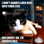 I Don't Always Look Deep in Your Eyes #MostInterestingCatInTheWorld