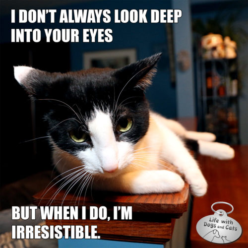 I don't always look deep in your eyes. But when I do, I'm irresistible. #MostInterestingCat
