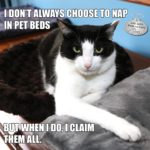 I Don't Always Choose to Nap in Pet Beds #MostInterestingCatInTheWorld