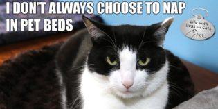 I Don't Always Choose to Nap in Pet Beds #MostInterestingCatInTheWorld