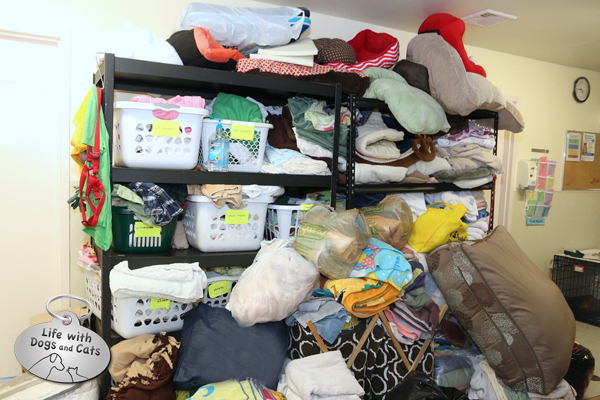 Towels overflowed the shelves inside Somerset Regional Animal Shelter as people continued to donate to help the canine victims of Hurricane Harvey.