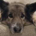 Pasha was adopted from the Somerset Regional Animal Shelter