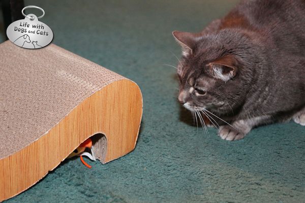 How To Figure Out What Scratcher Your Cat Will Like