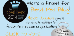 Story: 2014 Petties Pet Blog Award Finalist for Best Overall Pet Blog!