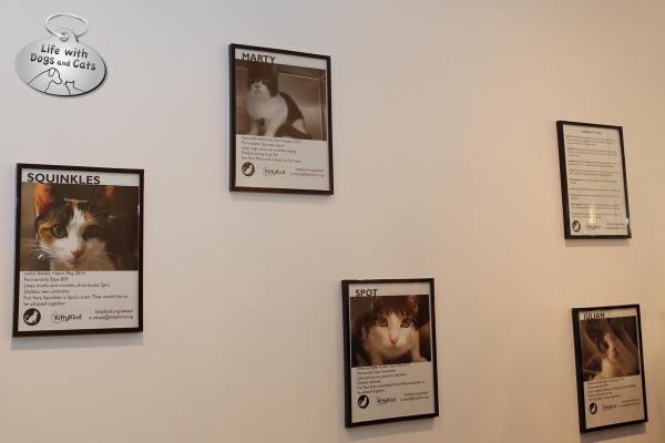 Photos on wall Meow Parlour