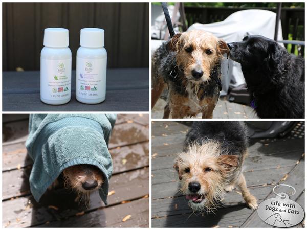 Pura Naturals pet shampoo