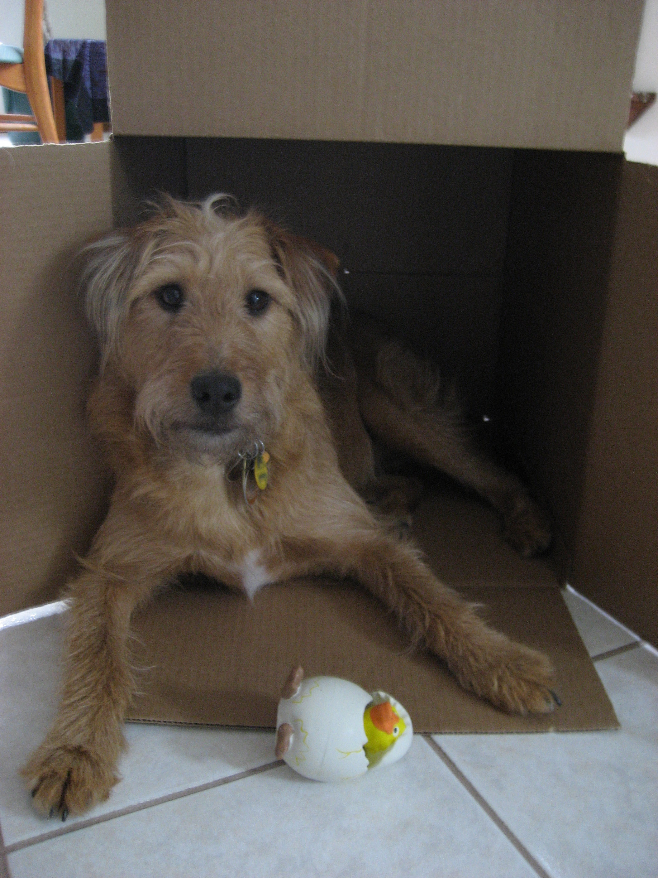 Rosie in box with ducky spring 2007
