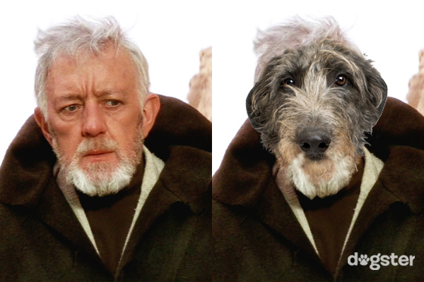 Dogs of Star Wars Scottish deer hound as Obi-wan Kenobi dogster logo