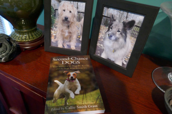 Rosie and Pasha, two of the dogs in my stories seen in Second-Chance Dogs..