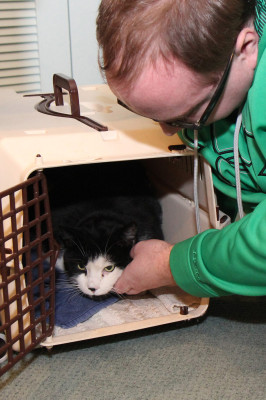 Petting the cat in the crate