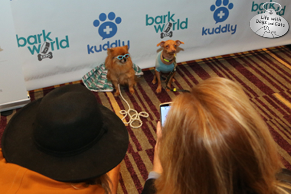 Pet moms take photos of pups Sophia Loren and Tuna of Tuna Melts My Heart at BarkWorld
