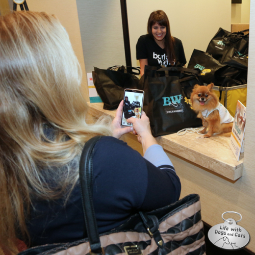 Little Sophia Loren picks up her swag at BarkWorld