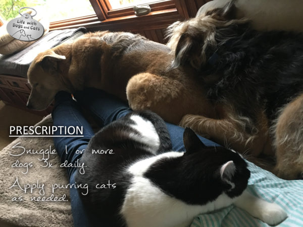 Best prescription: Snuggle 1 or more dogs 3x daily. Apply purring cats as needed.