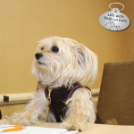 What I Did at BlogPaws