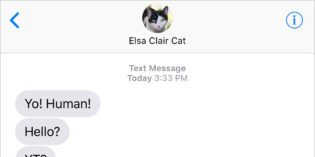 Text from Cat: Cat Time