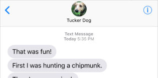 Text From Dog: Terriers