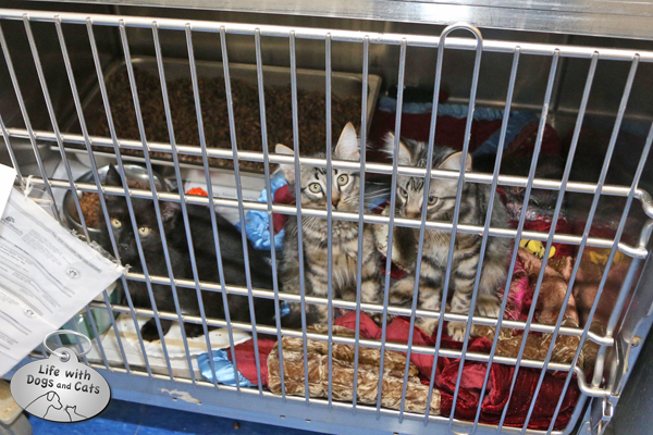 A trio of kittens were among the dozens available for adoption at SRAS.
