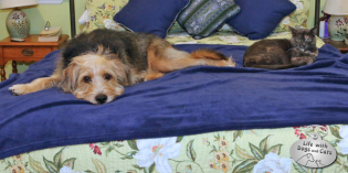Strange Bedfellows: Dogs and Cats Sleeping Together