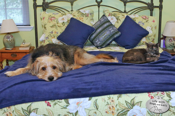 "Strange bedfellows: Athena isn't pleased to share ""her"" bed with Tucker"