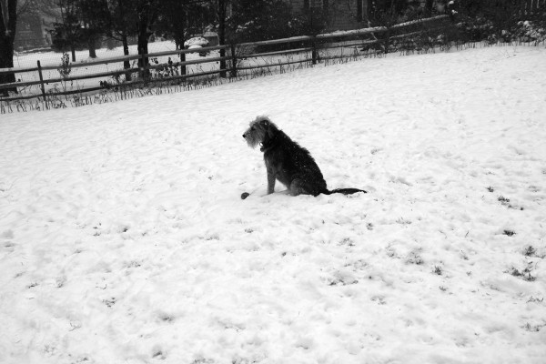 A dog, his ball and the snow