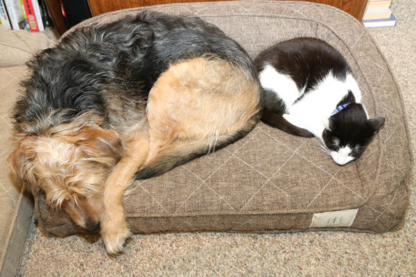 Tucker and Calvin share a bed.