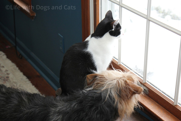 Calvin and Tucker looking out the window.