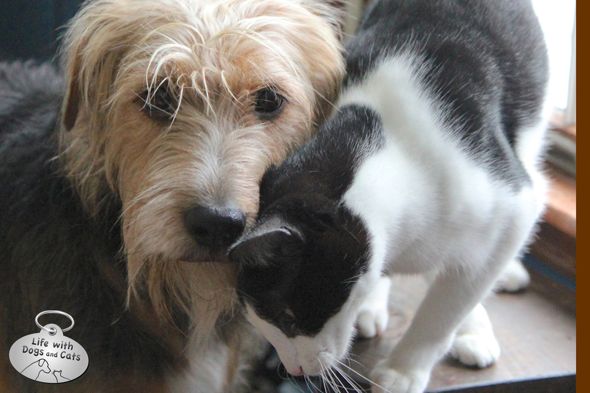 Calvin the cat loves Tucker the dog