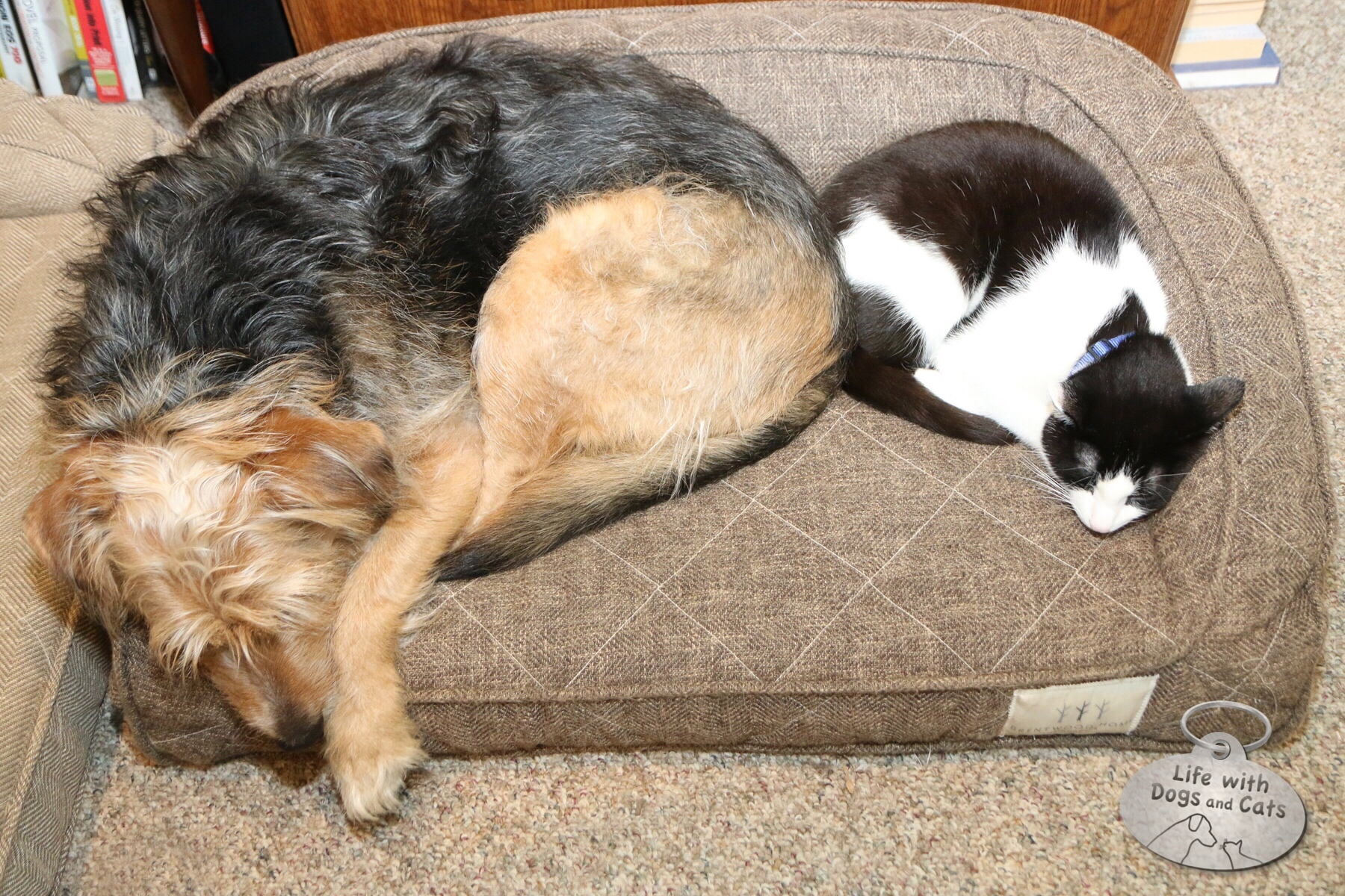 Tucker and Calvin had a very special relationship.